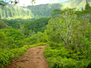 hawaii-365799_1280