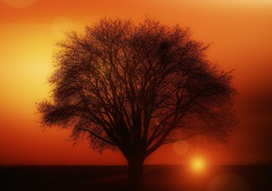 tree-117582_1280
