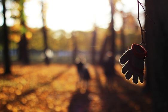autumn-1866635_1280